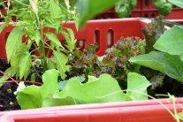 Gemüse aus der Kiste