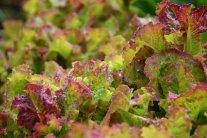 Salate für die kalte Jahreszeit