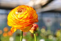 Bunt und farbenfroh in den Vorfrühling