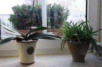 Mit Zimmerpflanzen durch die lichtarme Zeit