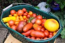 Mein Garten – mein Schlaraffenland