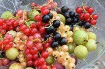 Ein Feiertag für das Obst