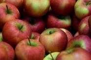 Apfelernte zum richtigen Zeitpunkt