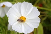 Blumenkästen für Bienen