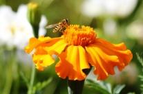 Nützliche kleine Helfer im Garten