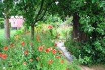 Der biodiverse Garten