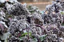Eigenes Garten-Gemüse im Spätherbst und Winter