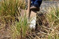 Frühjahrskur für Stauden und Gräser