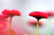 Fasching im Blumenkasten - Bunte Frühlingsboten