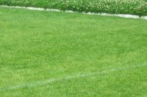 """""""Gras-Grün"""" im Garten (Teil 1)"""