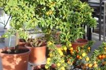 Kübelpflanzen kontrollieren