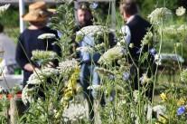 Jubiläum in der Beratung – die Bayerische Gartenakademie feiert Geburtstag