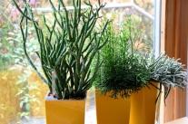 Pflanzliche Wohndekoration