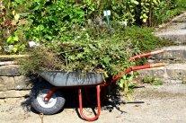 Gartenarbeiten nach dem Urlaub