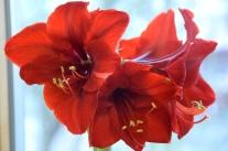 Ritterstern-Pflege für üppige Blüten