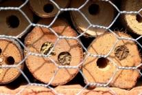 Nisthilfen für das Insekt des Jahres: die Rostrote Mauerbiene