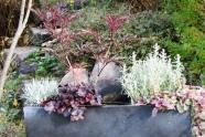 winterharte laub und nadelgeh lze zur bepflanzung von k beln. Black Bedroom Furniture Sets. Home Design Ideas