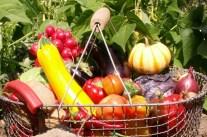 Gemüse im Gartenjahr – Hinweise und Anregungen zum Biogarten