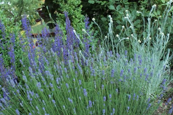 Kalteempfindliche Kleinstraucher Pflanzen Und Pflegen