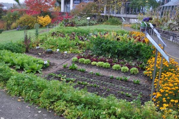 Gemüse Im Gartenjahr Gemuse Im Spatsommer Sorten Garten Tipps