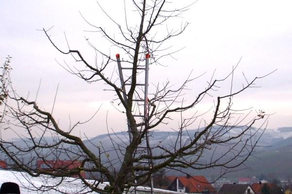 Gemeinsame Winterschnitt bei Apfelbäumen @OX_68