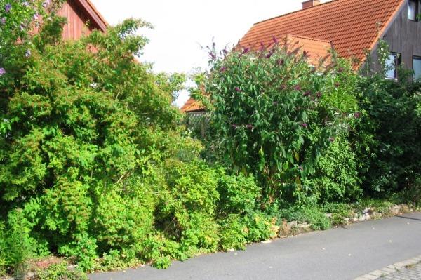 Heckengehölze Im Garten Nützlich Und Schön