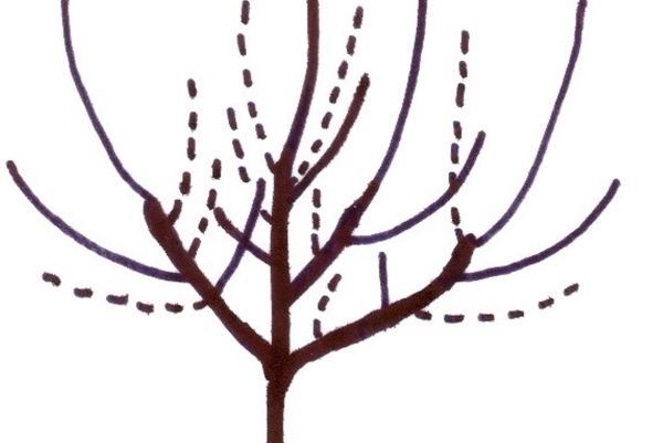 wann apfelbaum schneiden apfelbaum schneiden wann und wie apfelbaum schneiden wann b ume obstb. Black Bedroom Furniture Sets. Home Design Ideas