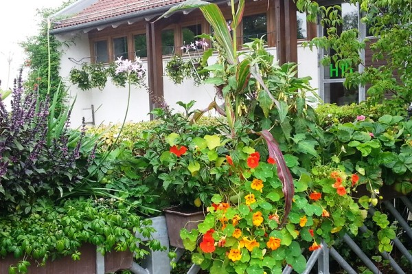 Balkon Und Terrassenbepflanzung Mit Mehrwert