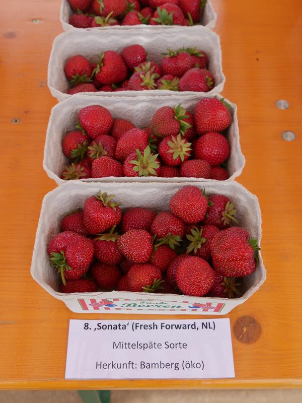 Untersuchungen Zum Nachbau Von Erdbeeren Auf Bodenmüden Standorten