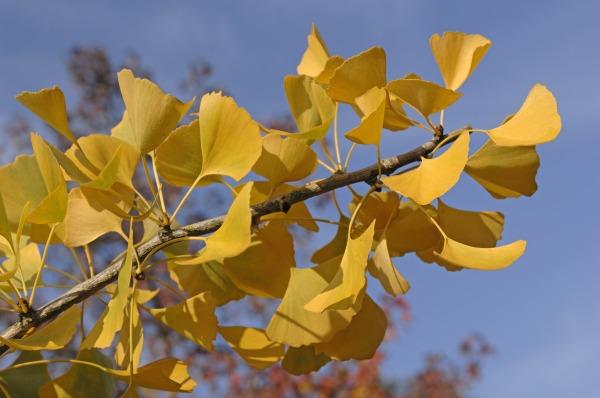 bäume die dem klimawandel gewachsen sind