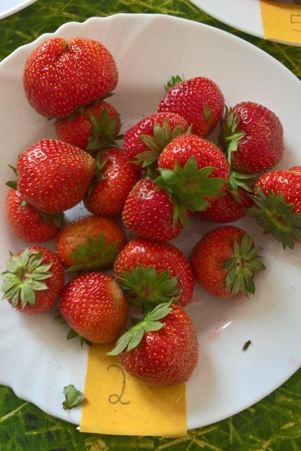 Erdbeeren Verstehen