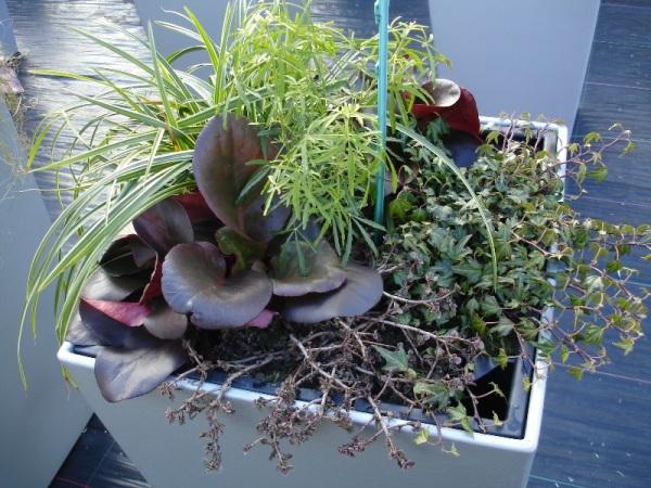 Pflanzen f r winterliche freiland gef e - Winter gartenbau ...