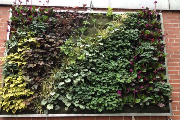 Beliebt Vertikales Grün: Begrünung mit System(en) DJ95