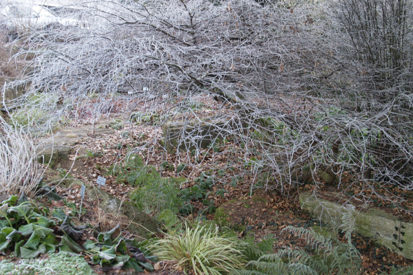 Immergrüne Gräser trostlos oder attraktiv farbe und struktur mit pflanzen im winter
