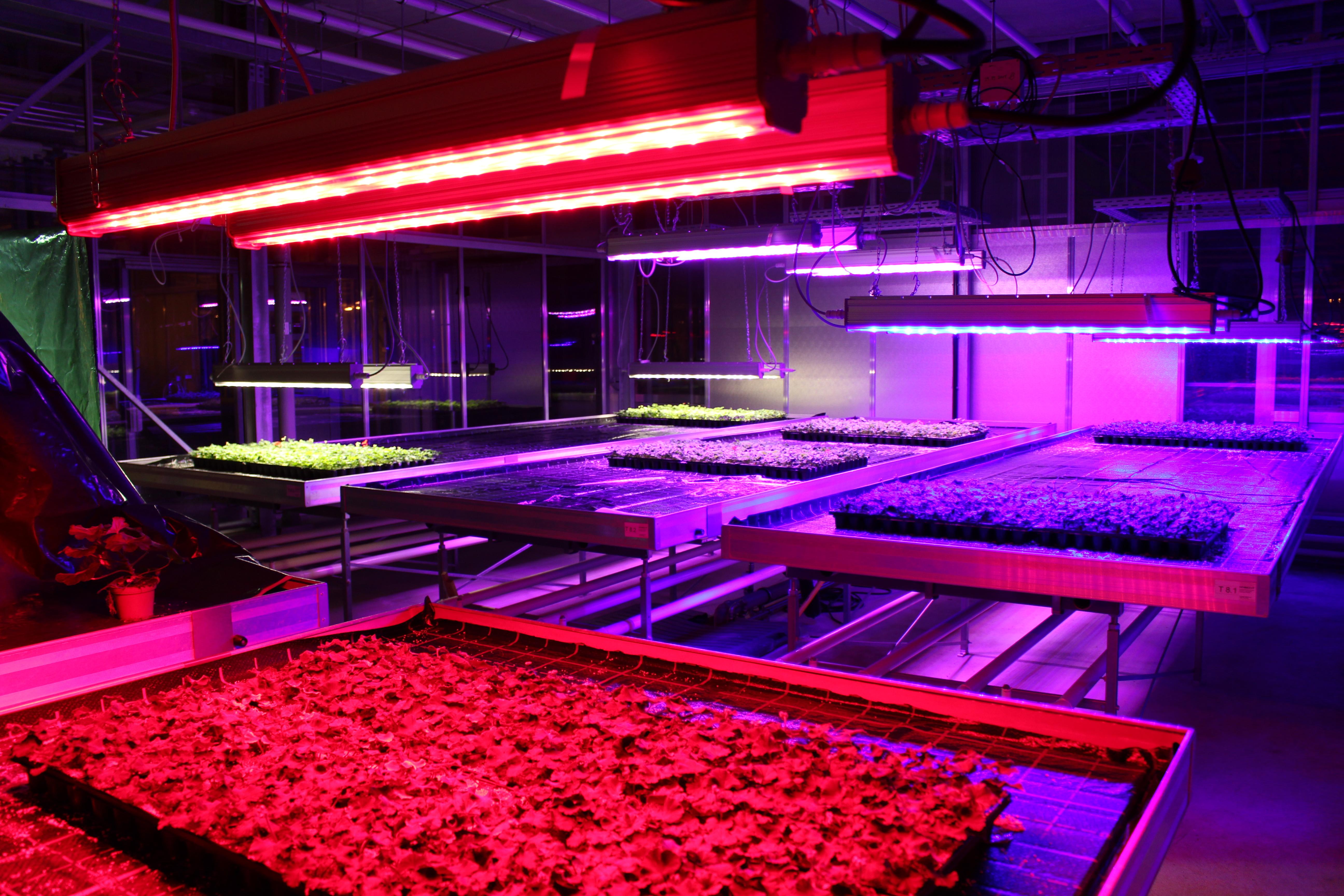 led forschungsprojekt licht einfluss aufs pflanzenwachstum die farbe macht s. Black Bedroom Furniture Sets. Home Design Ideas