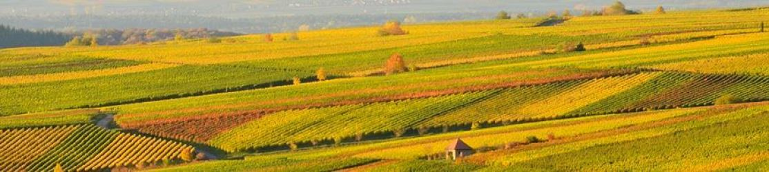 Header Weinberge In Herbstfarben